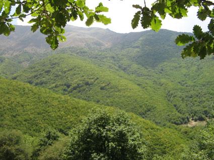 جریمه 8 میلیون تومانی برای تخریب هر هکتار از منابع طبیعی