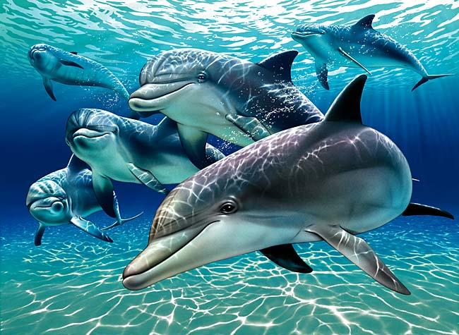 دلفین ها با جملاتی کامل صحبت می کنند