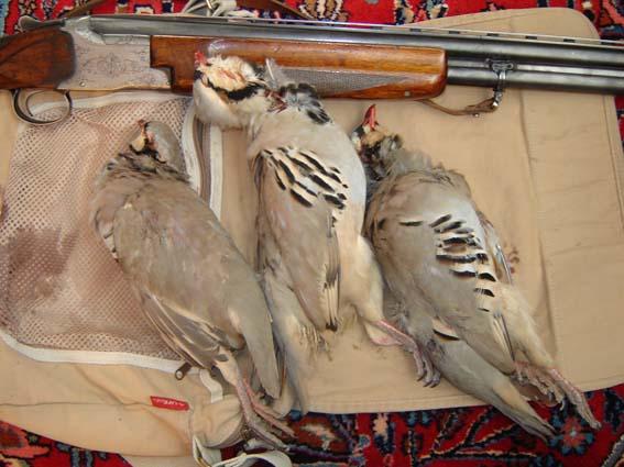 صید پرندگان در ایران